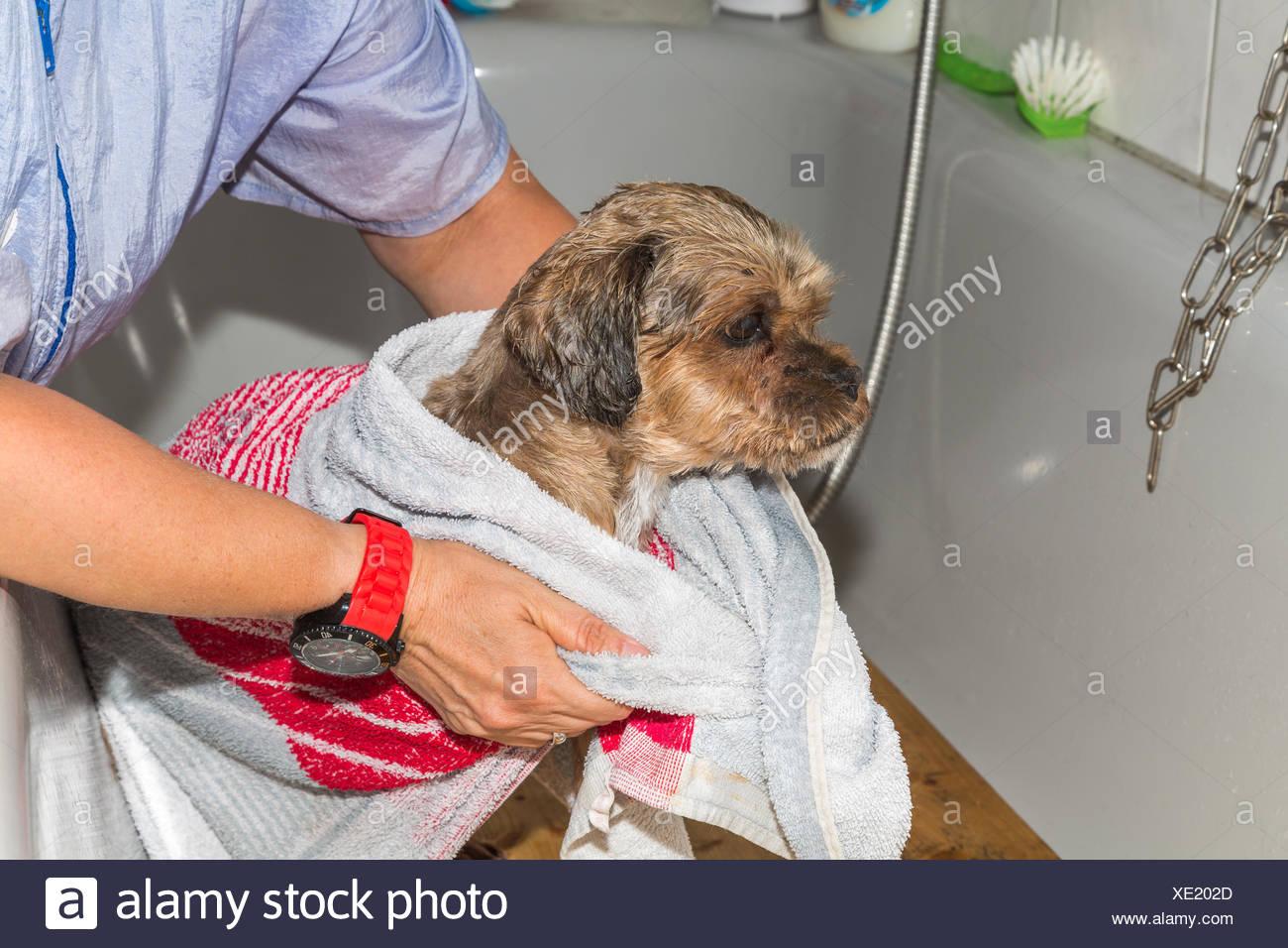Hund Duschen Stockfotos Hund Duschen Bilder Alamy