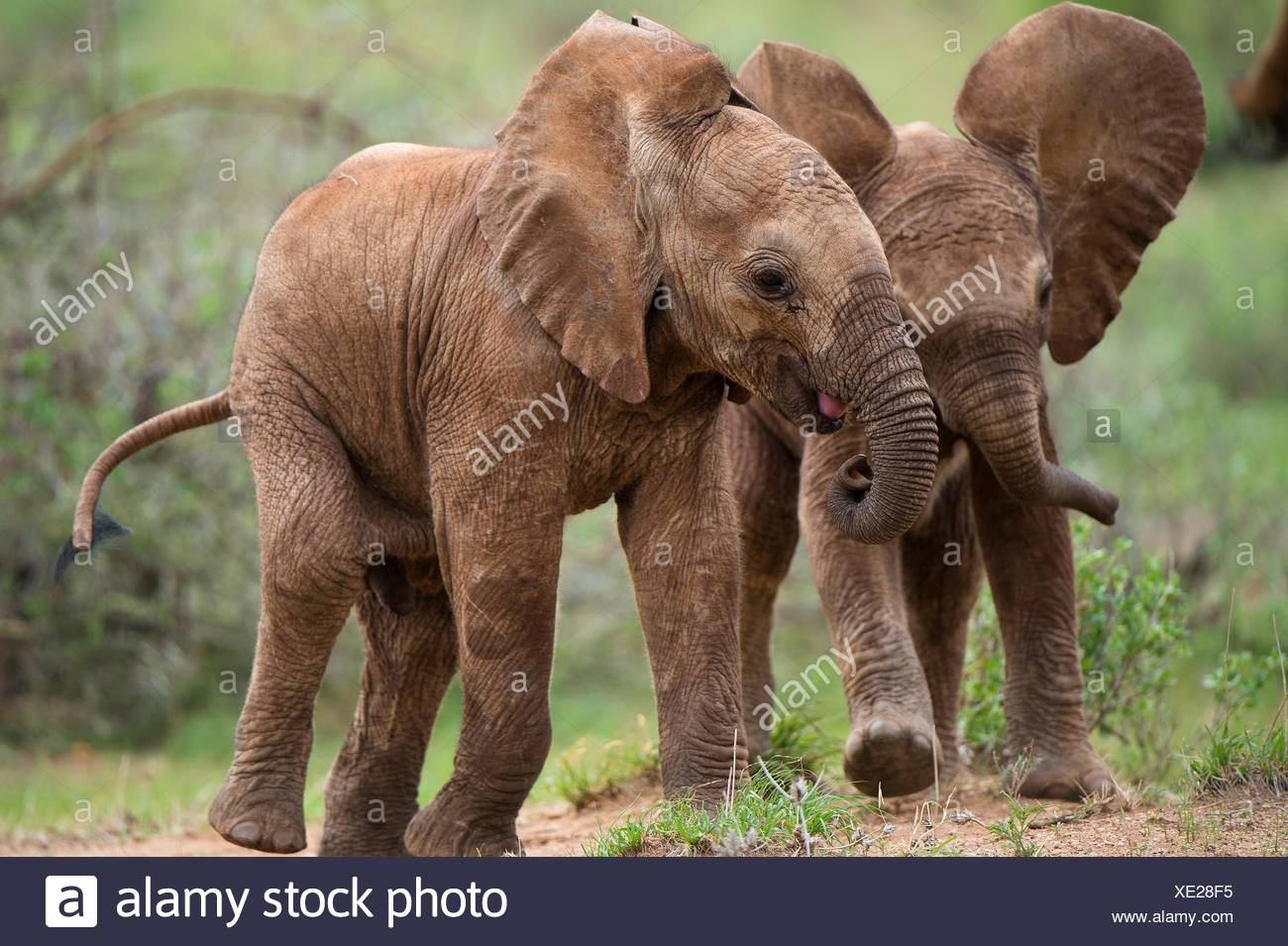 Fein Süße Baby Elefanten Malvorlagen Fotos - Druckbare Malvorlagen ...