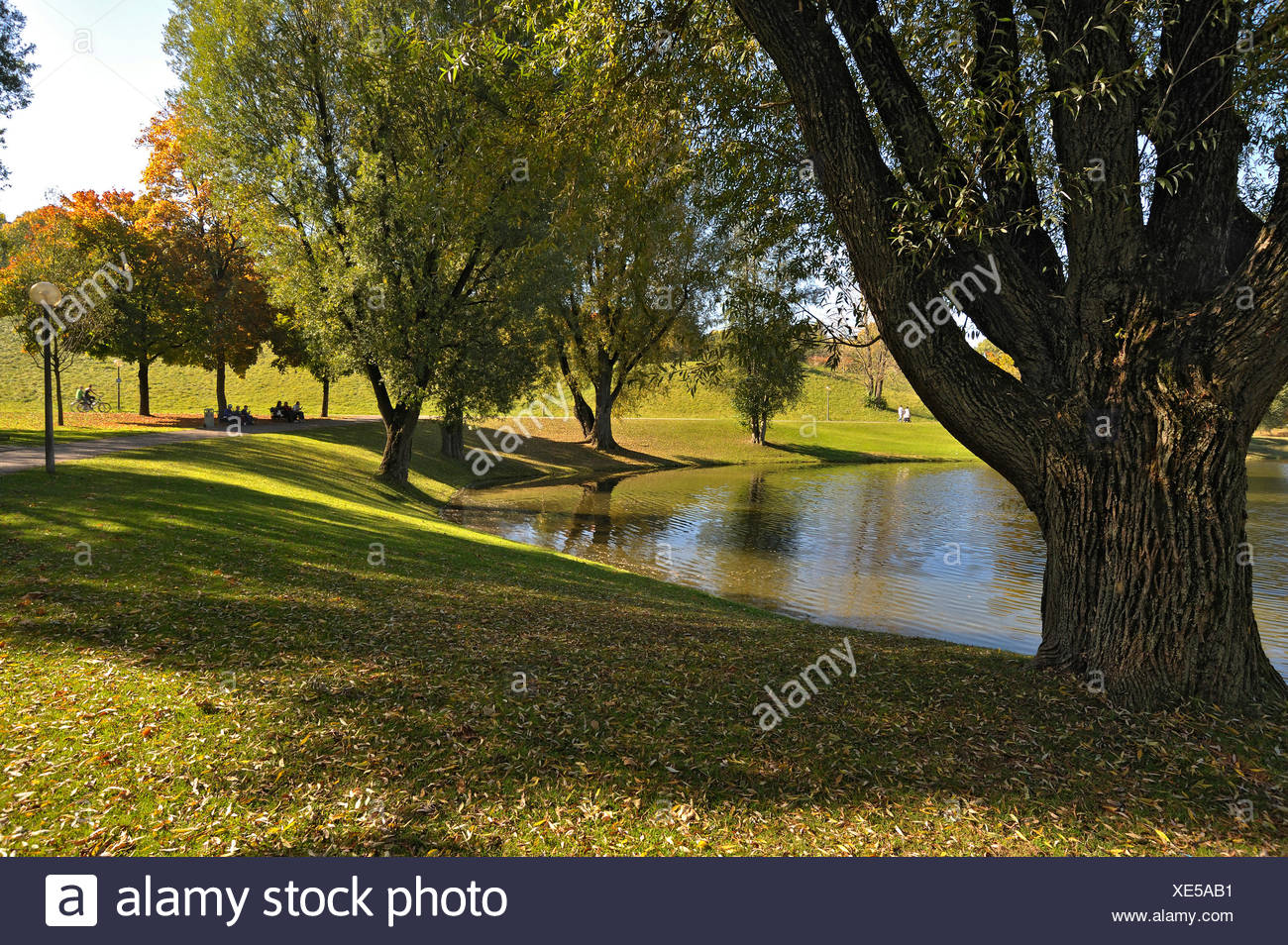 Olympiapark Gärten Mit Weiden Salix Und See Olympiasee