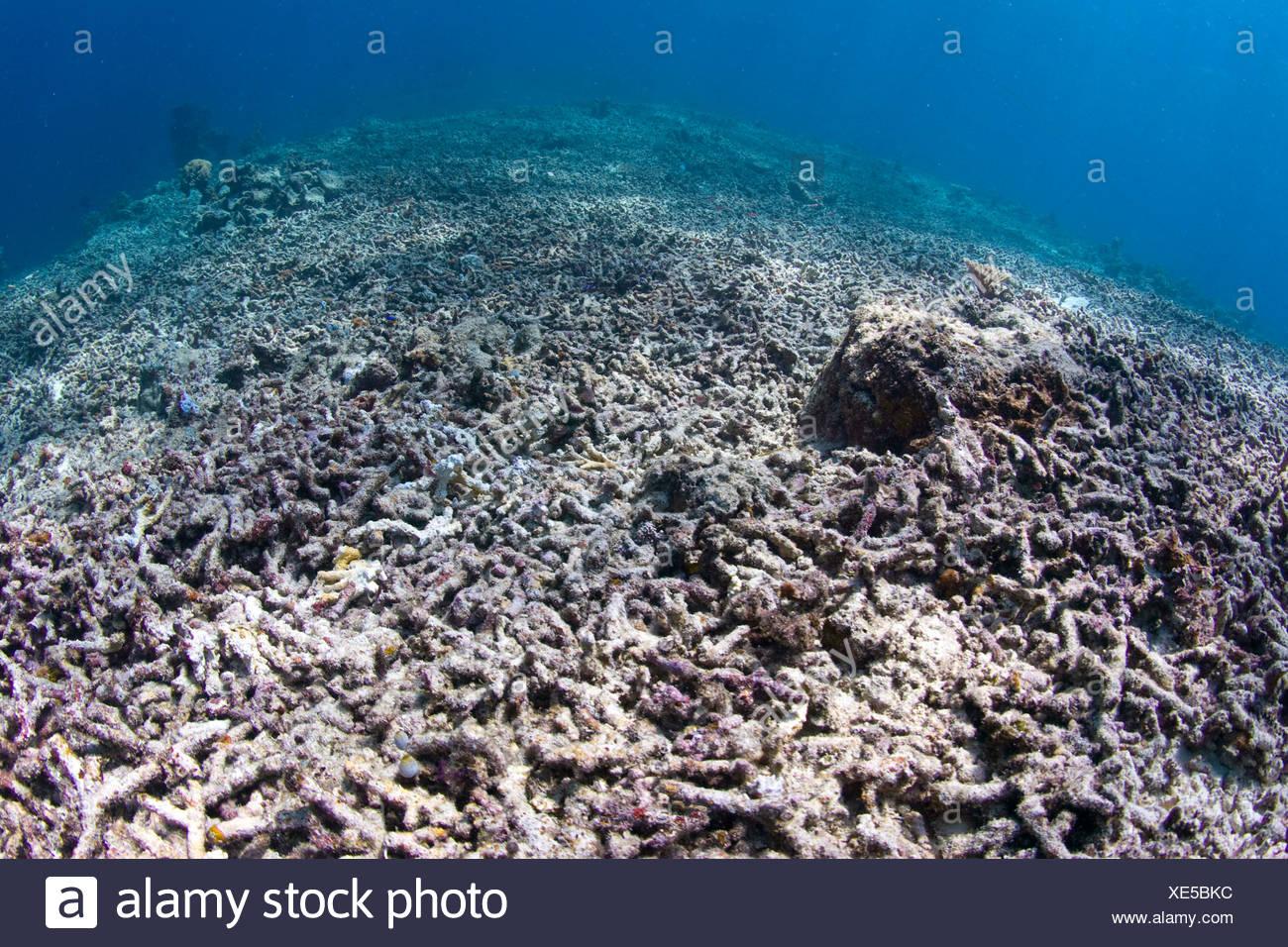 Erfreut Korallenriff Fisch Malvorlagen Bilder - Malvorlagen Von ...