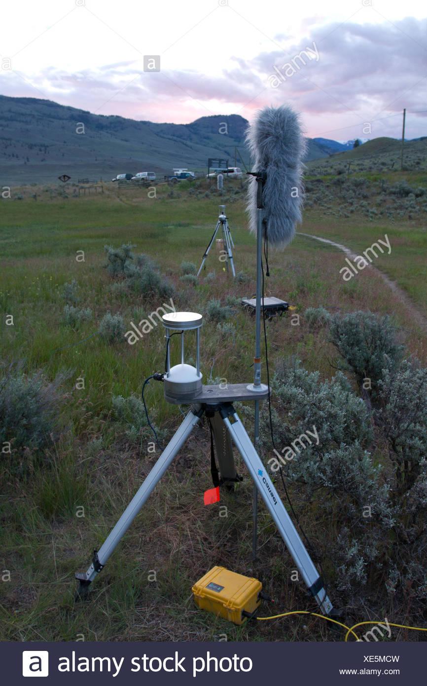Fledermaus-akustische Überwachung, Okanagan, BC, Kanada Stockbild