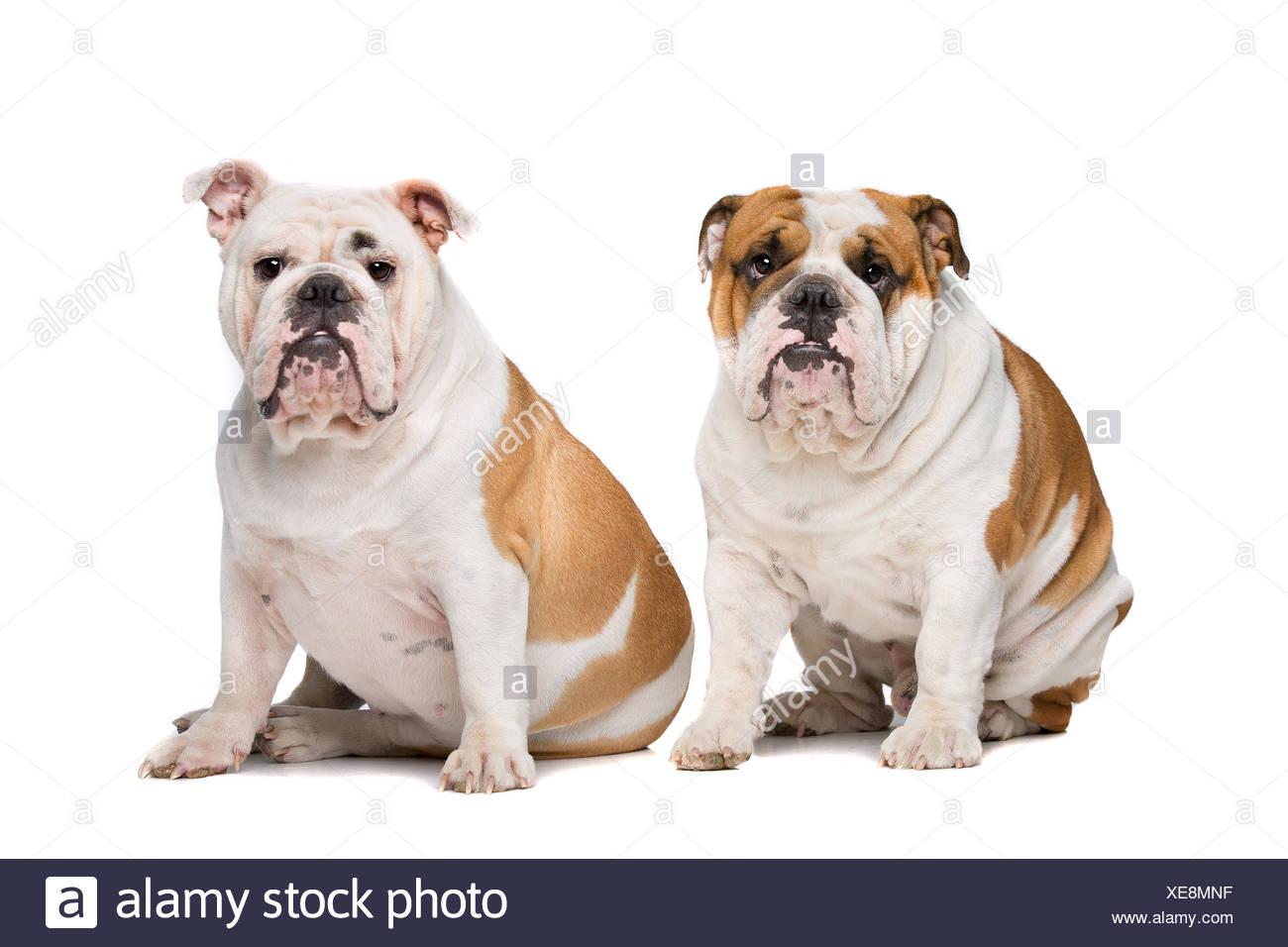 Ungewöhnlich Bulldog Färbung Seiten Galerie - Druckbare Malvorlagen ...