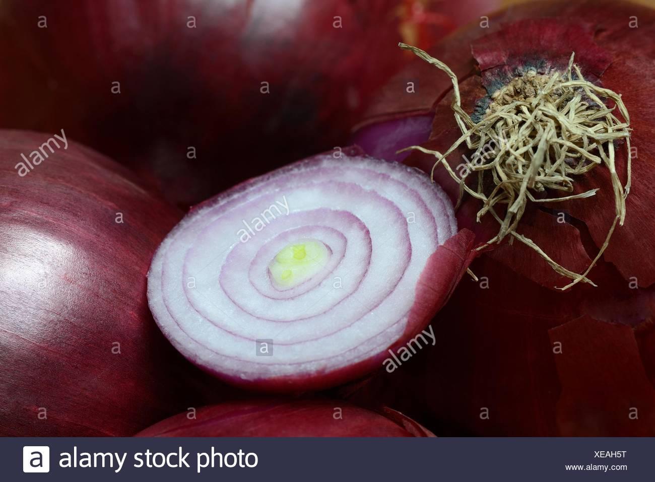 rote Zwiebeln (Allium Cepa) Stockbild