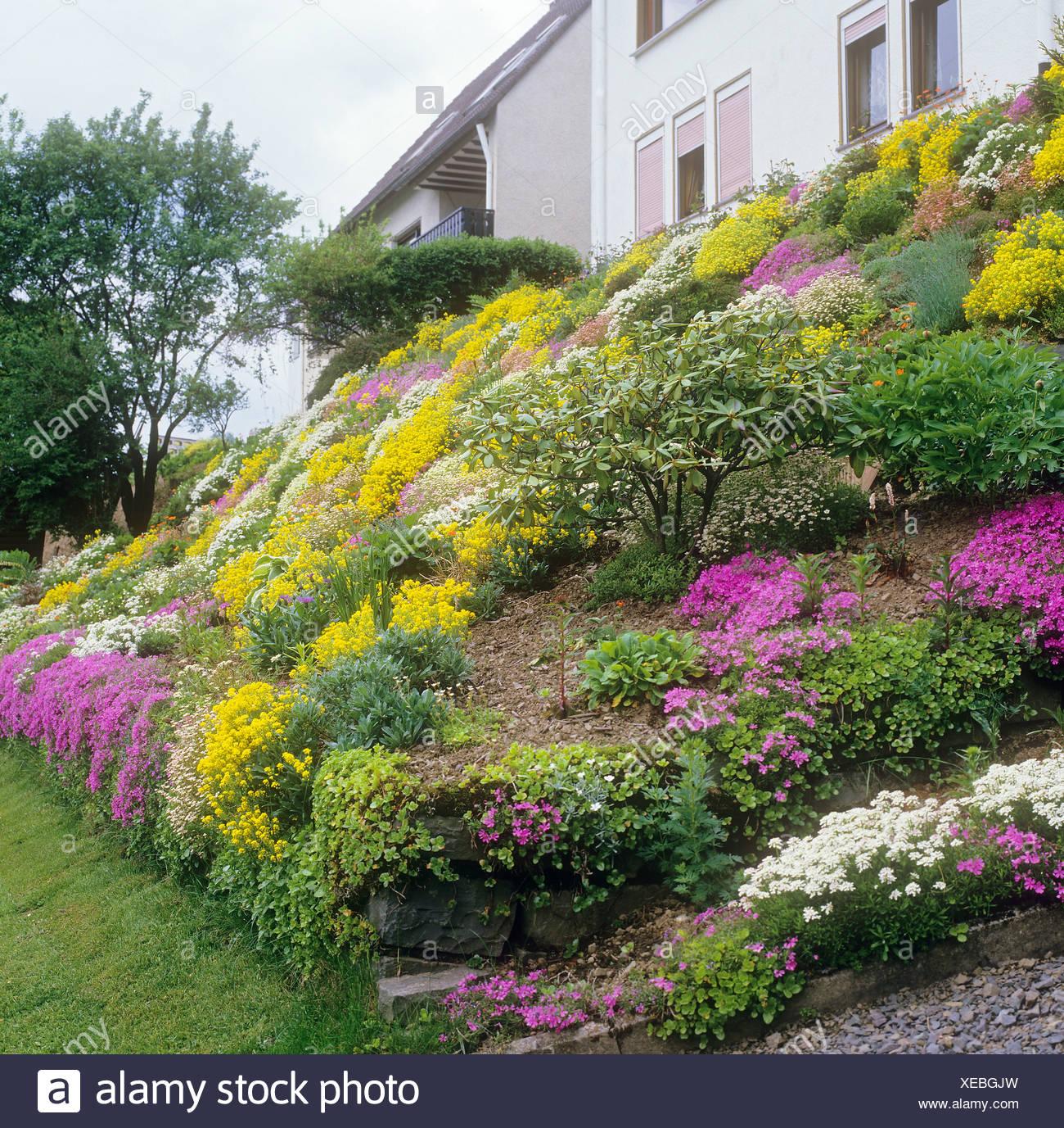 Steingarten mit verschiedenen Blumen Stockfoto, Bild: 284225617 - Alamy