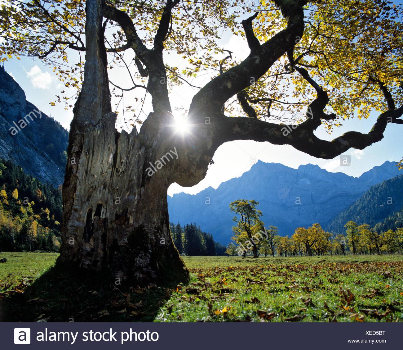 Grosser Ahornboden, Herbst, Mt. Spritzkarspitze, Eiskarln, Karwendel-Bereich, Tirol, Österreich Stockbild