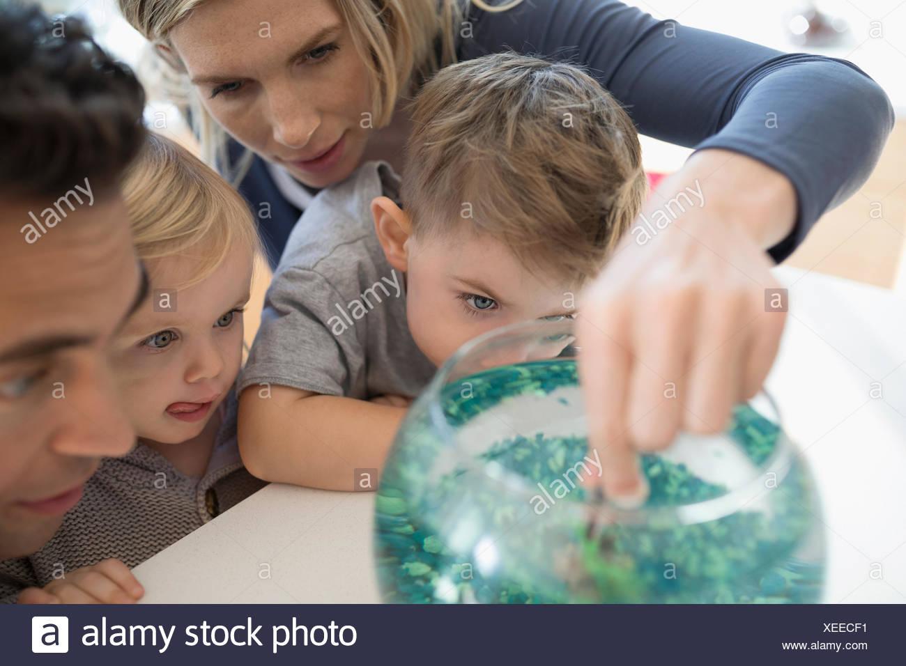Junge Familie füttern Goldfisch in der Schüssel Stockbild