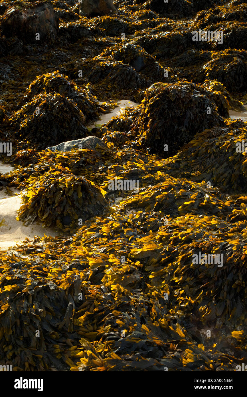 Zona intermareal (área de mareas). Playa Dail Beag Playa. La Isla de Lewis. Outer Hebrides. Escocia, Reino Unido Foto de stock