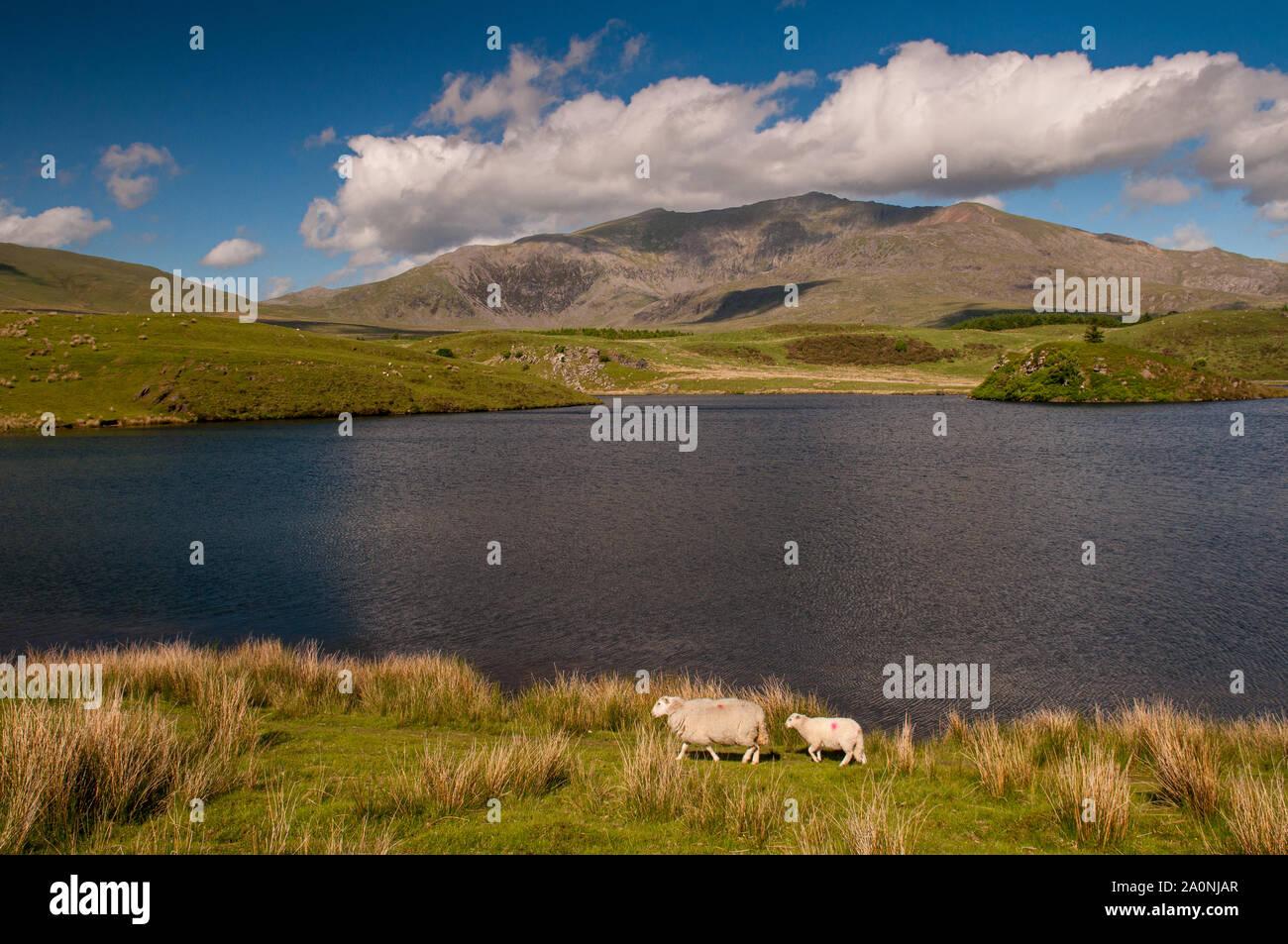 Snowdon Mountain se eleva desde las costas de Llyn y Dywarchen, un pequeño lago ar Rhyd-Ddu en el Parque Nacional de Snowdonia, al norte de Gales. Foto de stock