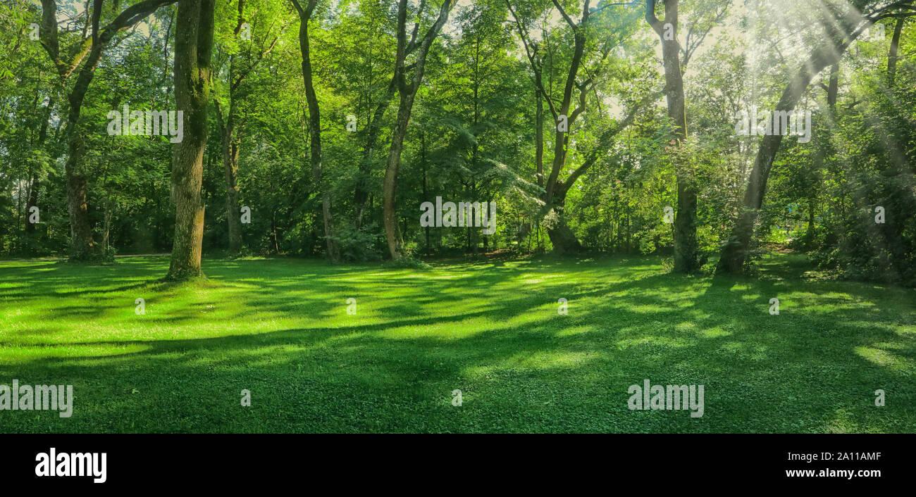 Hermoso y verde pradera rodeada de árboles, con sunbeam rayos, paisaje en el Englischer Garten en Munich Foto de stock
