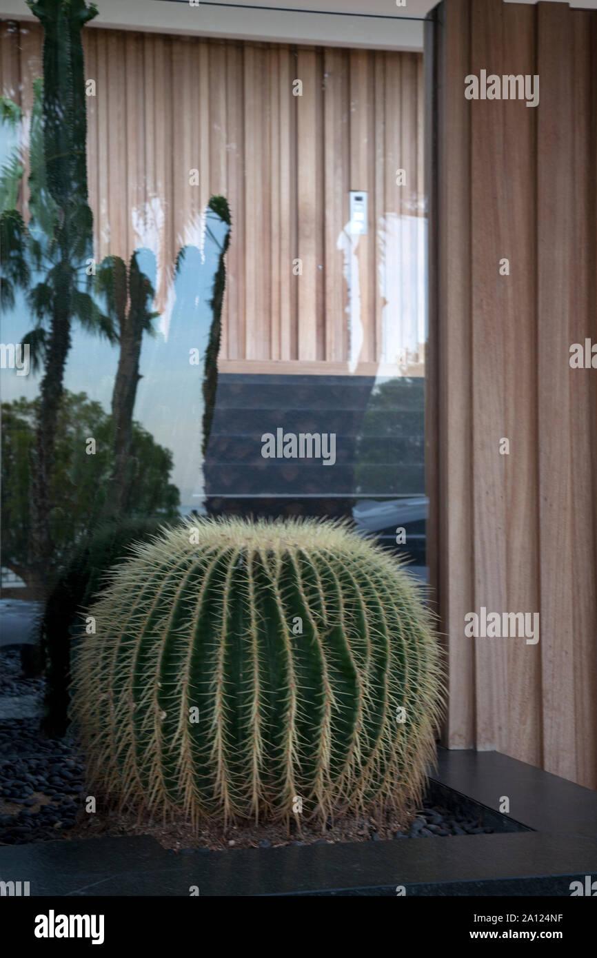 Cactus fuera villa entrada vouliagmeni Atenas Attica Grecia Foto de stock