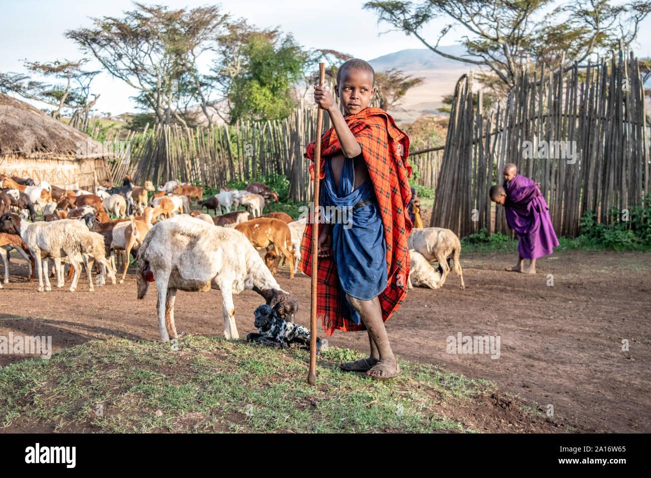 Niños masai es responsable de cabras de la familia, los guardias del recién nacido y su madre de cabra. Foto de stock
