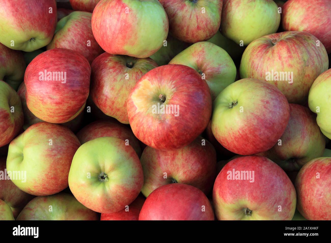 """Apple 'Bushey y continúe Grove"""", manzanas de cocina, cocinas, Malus domestica Foto de stock"""