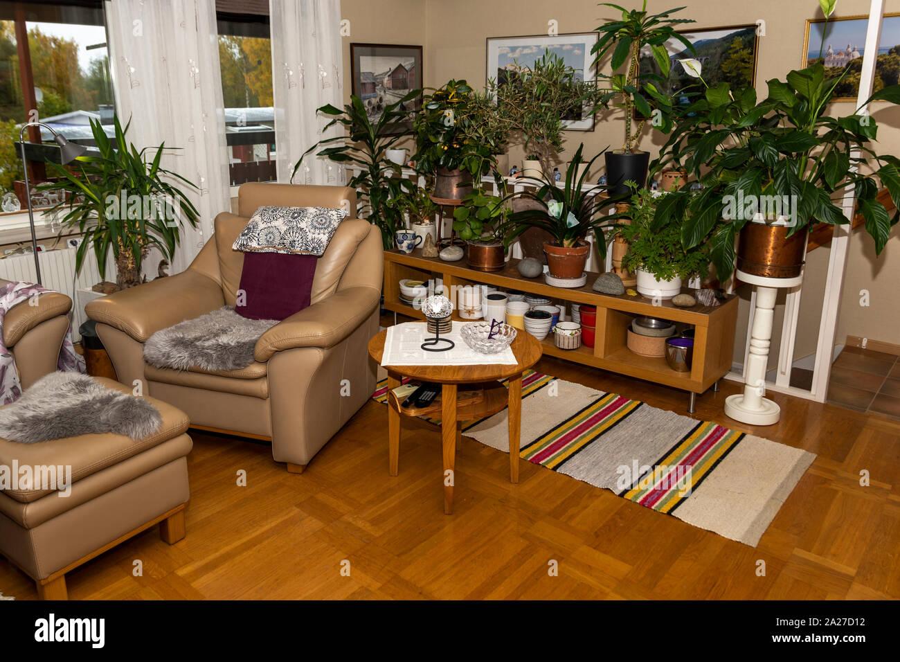 Habitación con un montón de flores y plantas verdes, imagen desde el norte de Suecia. Foto de stock