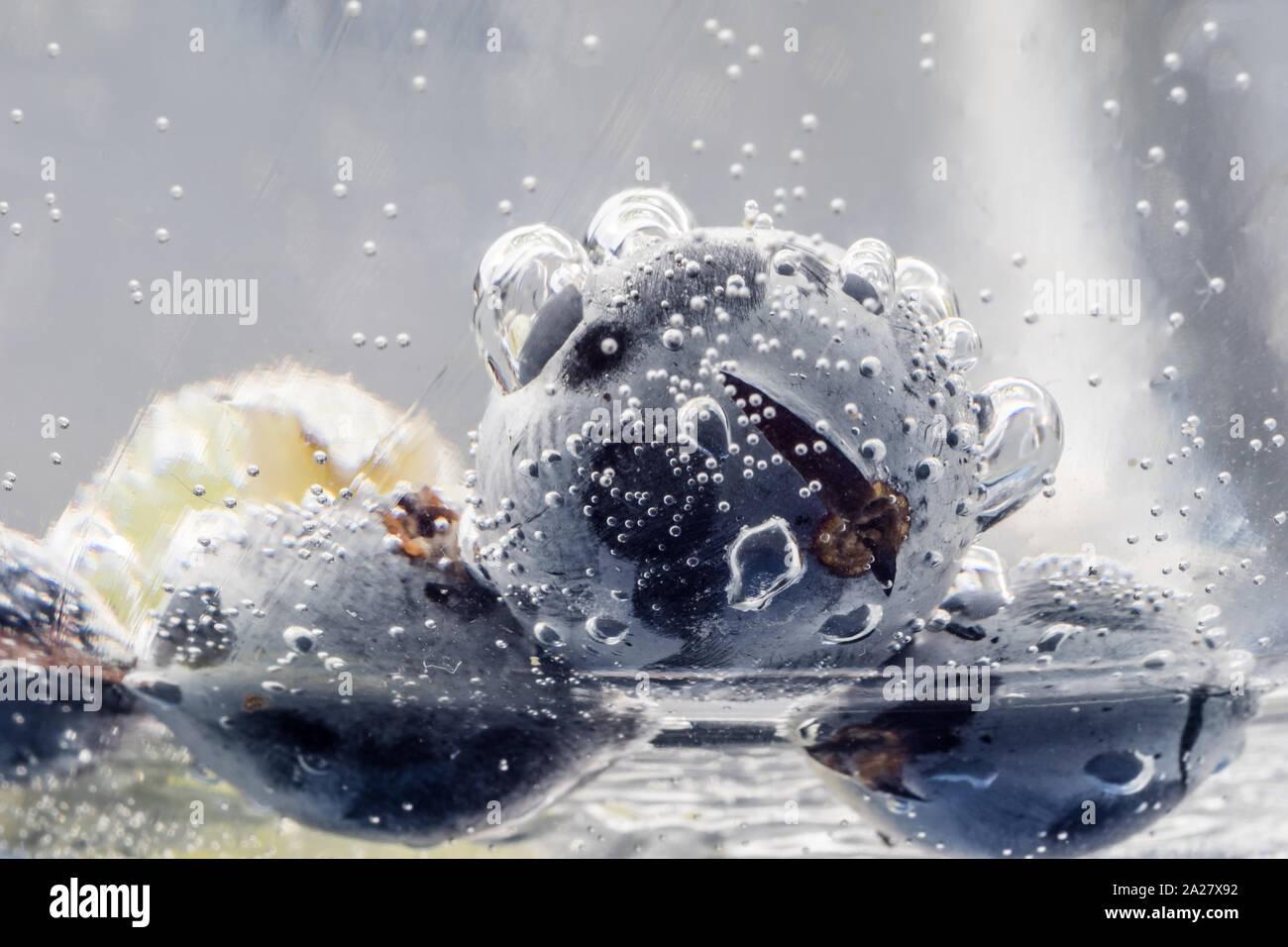 En der Wasserkaraffe Blaubeeren Foto de stock