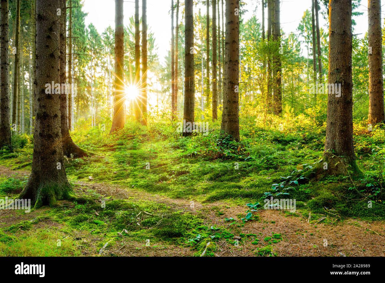 Hermoso bosque en primavera con la brillante luz del sol brillando a través de los árboles Foto de stock