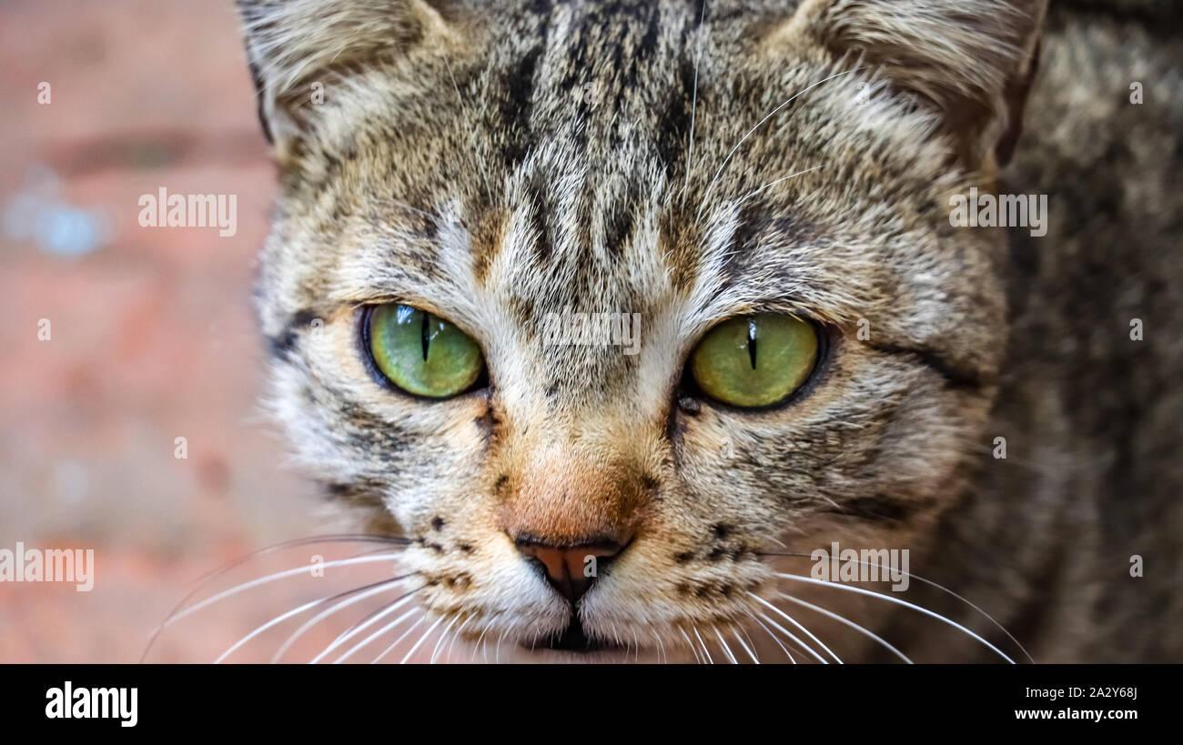 Primer plano de un ojo de gato. Foto de stock