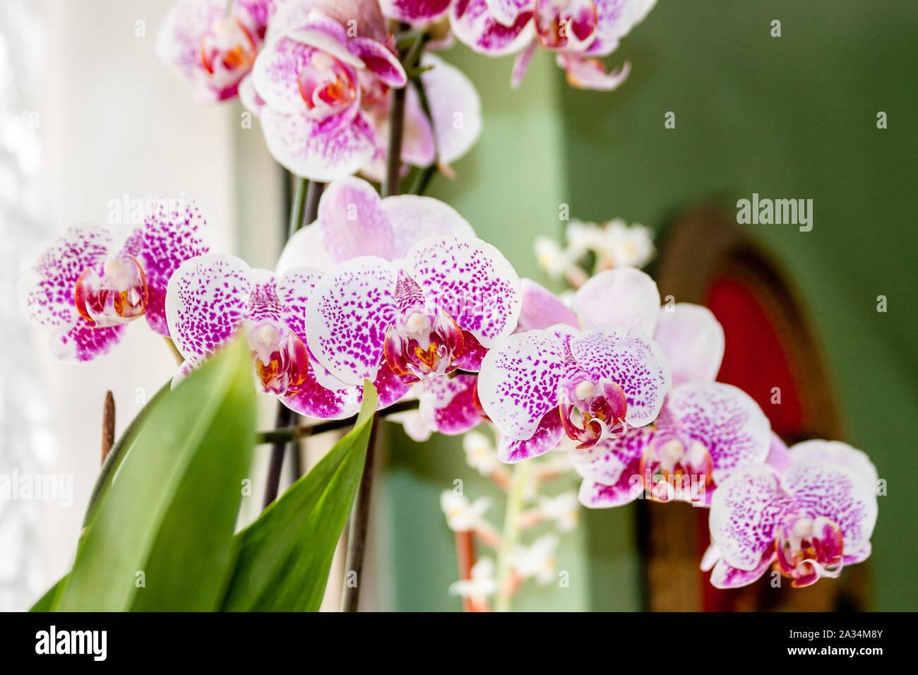 Hornsey, Londres, Reino Unido 5 Oct.2019. Casa plantas y orquídeas. Foto de stock