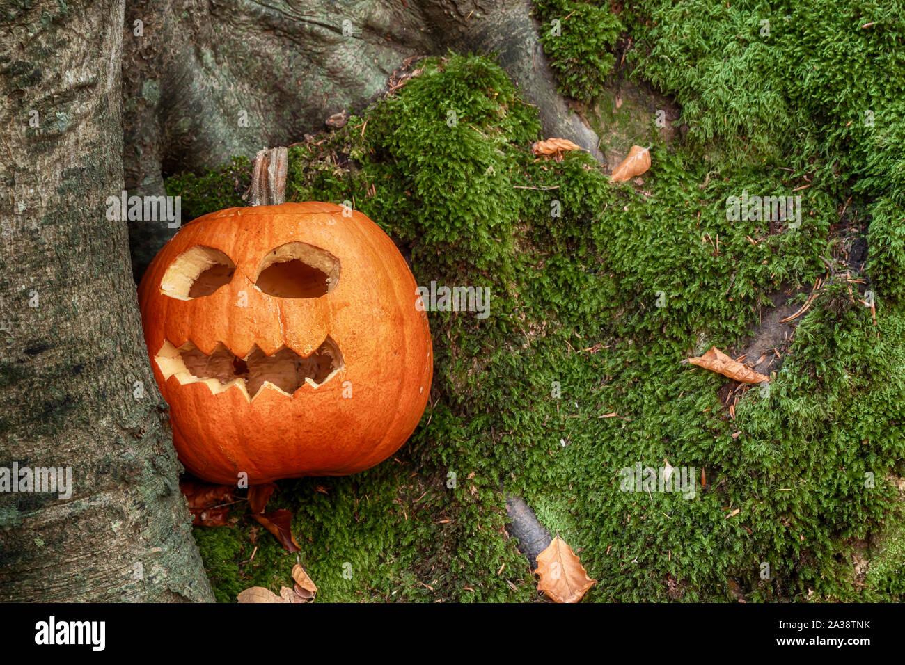 Halloween calabaza con miedo cara recortada Foto de stock