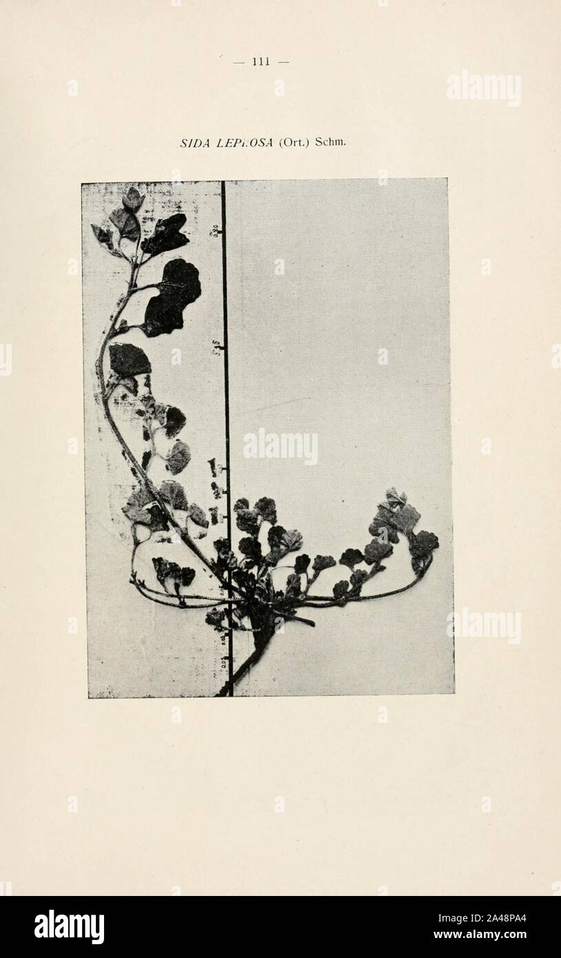 La flora de la Provincia de Buenos Aires (página 111) Foto de stock