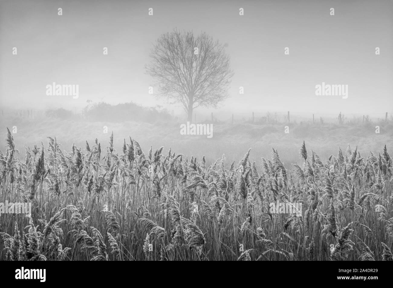Amanecer a lo largo de los pantanos en monocromo Foto de stock