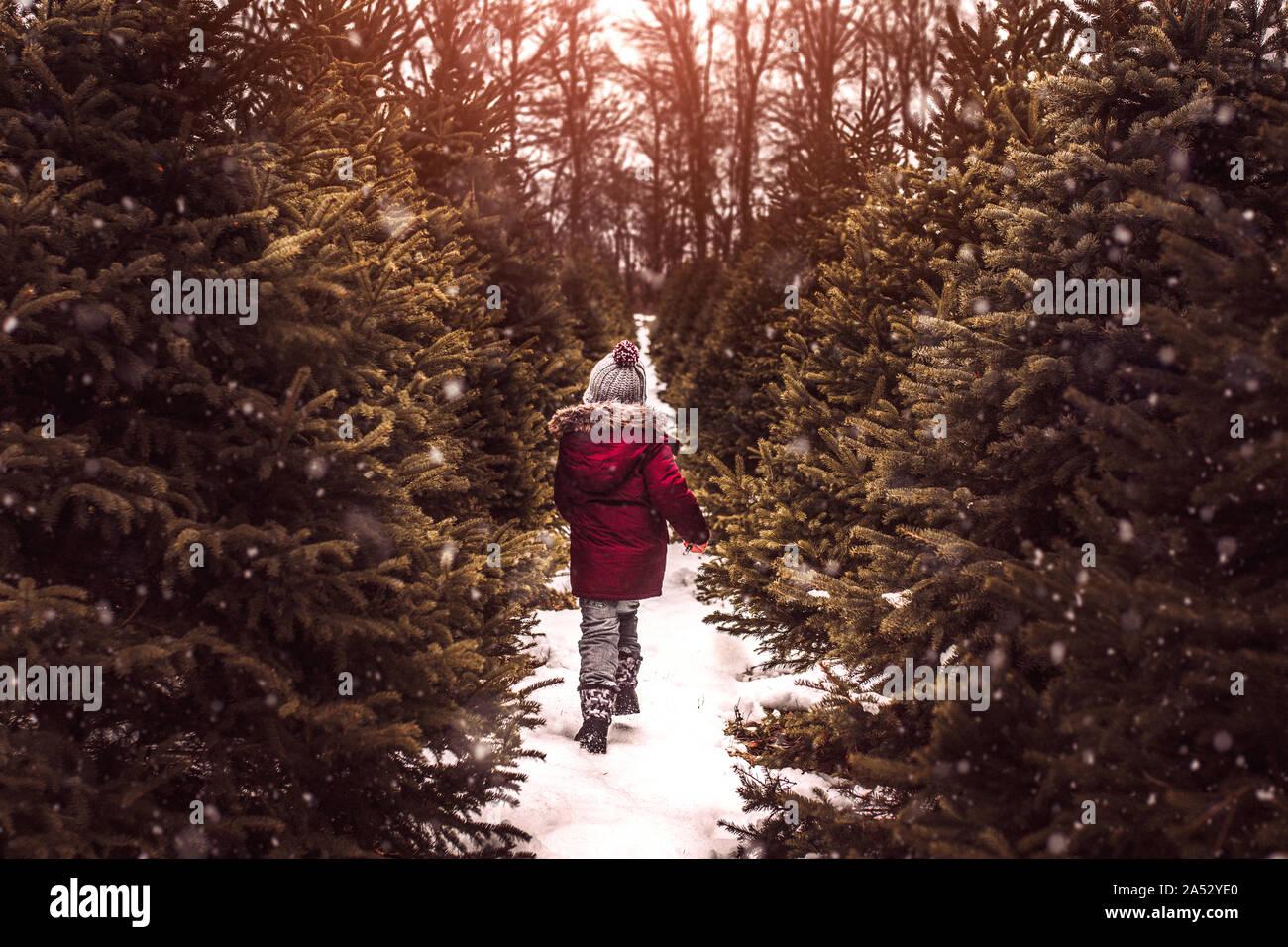 Chico busca un árbol de Navidad perfecto en un día nevado de invierno Foto de stock