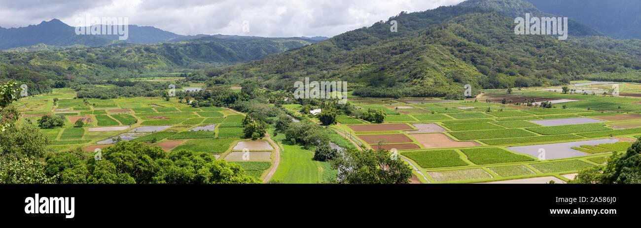Granja de Taro Princeville Hawaii Foto de stock