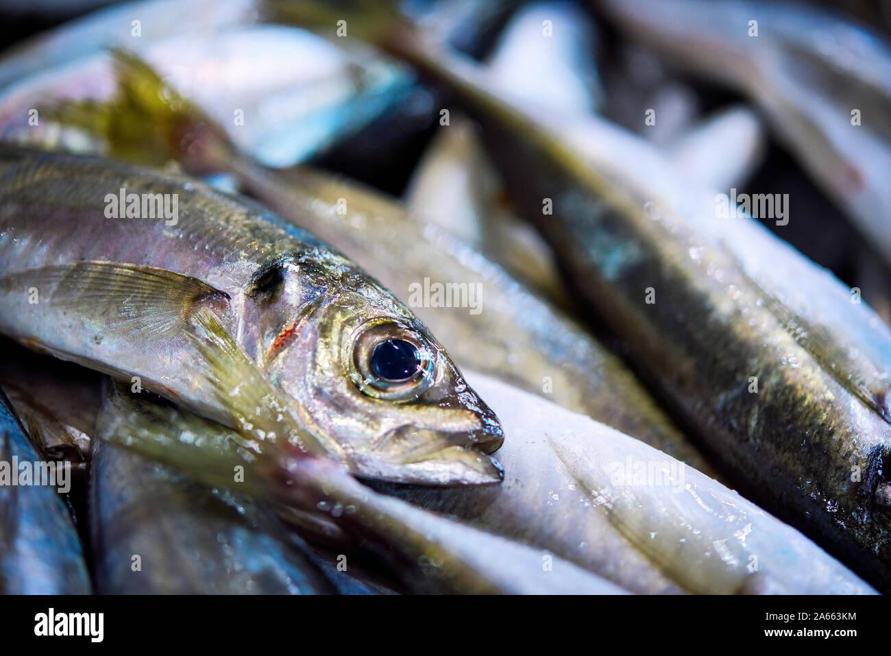 Grandes frescas sardinas portuguesas sobre hielo exposición en el mercado de pescado. Cerca. Foto de stock