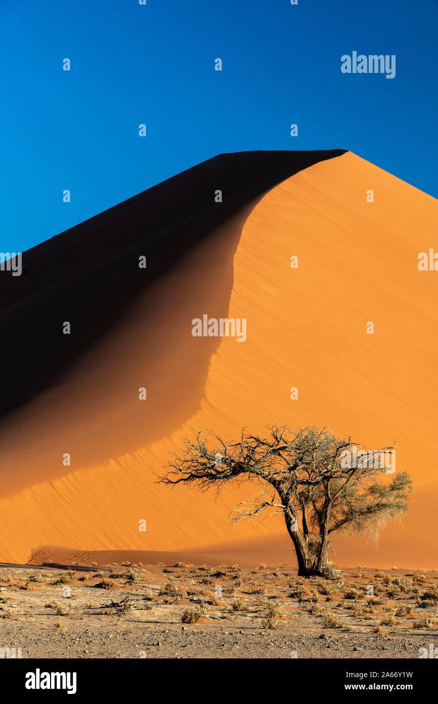 Una duna de arena, el Parque Nacional Namib-Naukluft Sesriem, Namibia Foto de stock