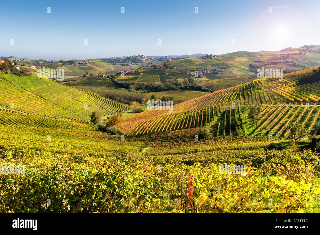 Viñedos Langhe de Barbaresco en otoño, Piamonte, Italia. Foto de stock