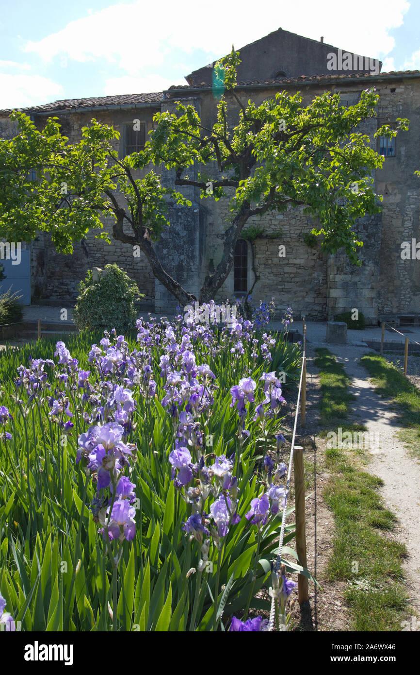 Jardín de Saint-Paul-de-Mausole sanitorium de St-Remy-de-Provence, Bouches du Rhône, Francia Foto de stock