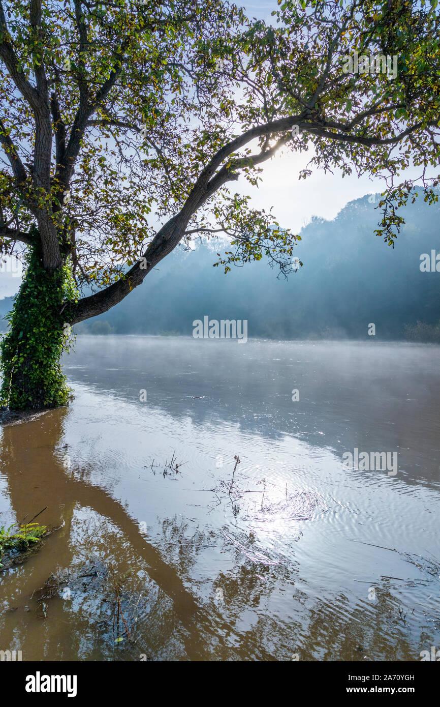 Niebla se alza sobre el río Wye en la inundación por la B4234 en el Gloucestershire/Herefordshire frontera 28.10.2019 cerca de Lower Lydbrook, Gloucestershire Foto de stock