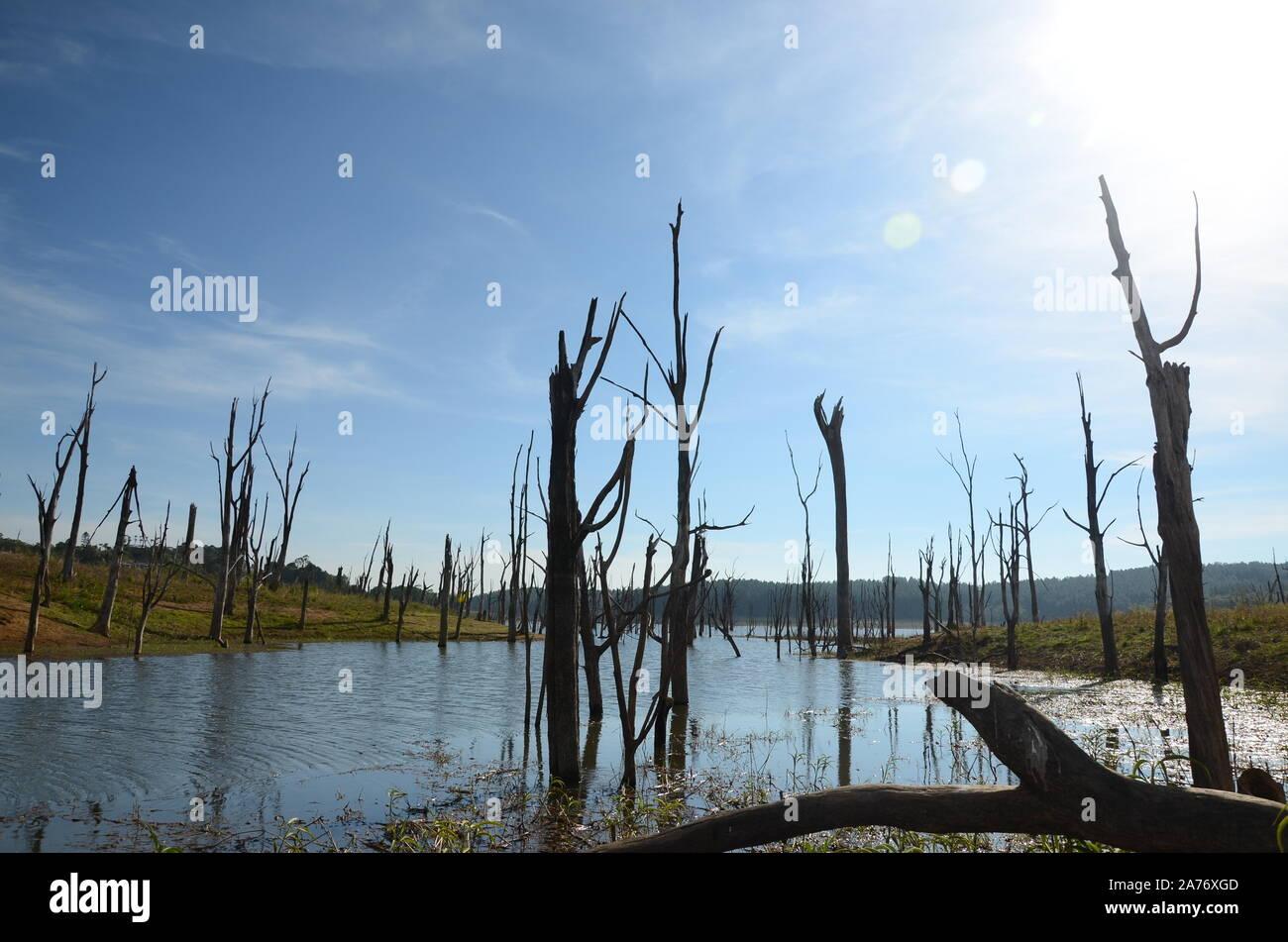Bosques destruidos por las inundaciones, el calentamiento global Foto de stock