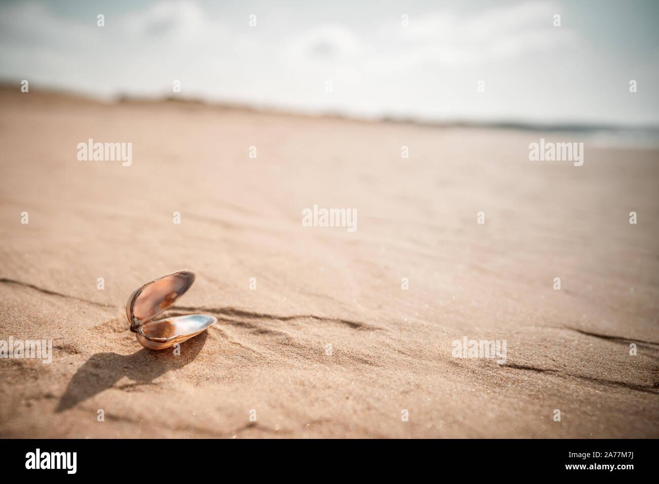 Shell en el suelo de arena en el desierto Foto de stock