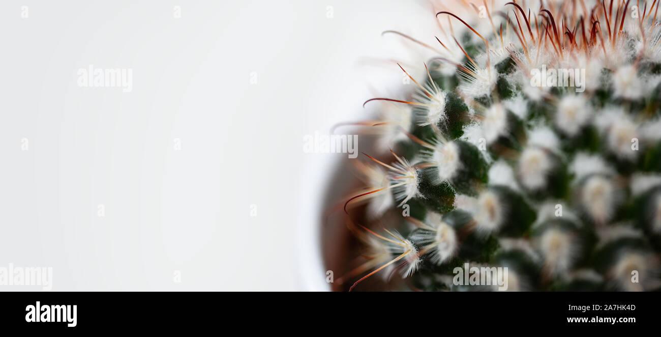 Un primerísimo plano de un cactus Foto de stock