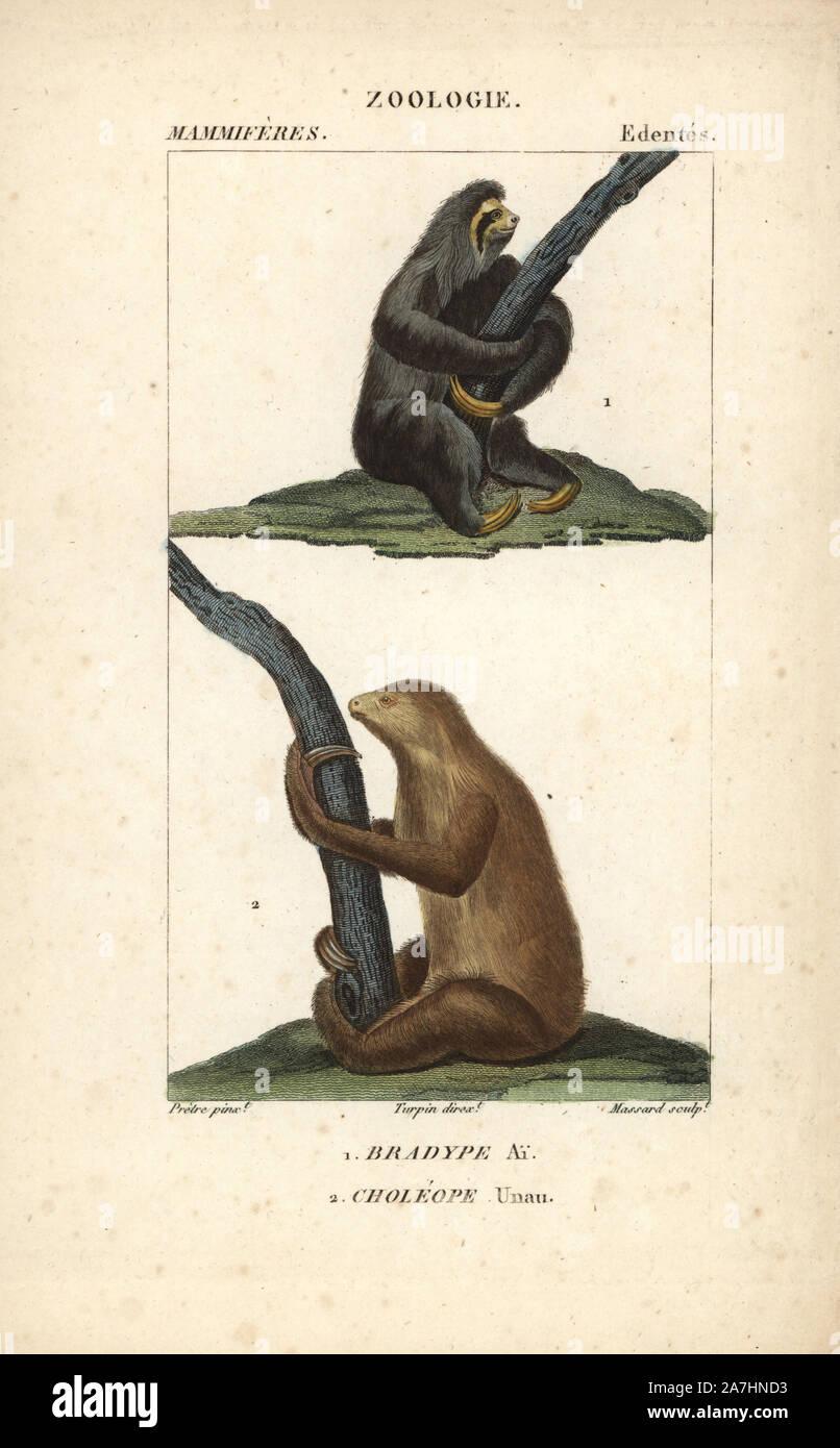 """Aguarï perezoso de tres dedos, Bradypus torquatus (vulnerable), y de dos Linnaeus vetado perezoso, Choloepus didactylus. Copperplate Handcolored stipple grabado de Frederic Cuvier's 'Dictionary de Ciencias Naturales: mamíferos"""", París, Francia, 1816. Ilustración por J. G. Pretre, grabado por Massard, dirigida por Pierre Jean-Francois Turpin, y publicado por F.G. Levrault. Jean Gabriel Pretre (1780~1845) fue pintor de historia natural en el zoológico de la Emperatriz Josefina y más tarde se convirtió en el artista al Museo de Historia Natural. Turpin (1775-1840) está considerado como uno de los mejores ilustradores de los botánico francés Foto de stock"""