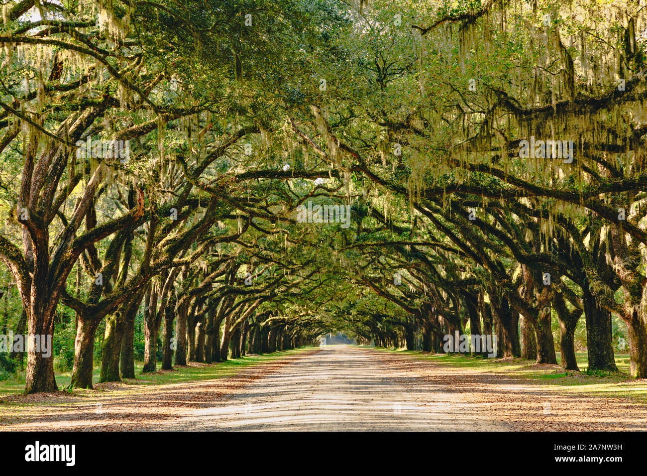Una impresionante, largo camino bordeado con antiguos robles cubiertos de musgo español cerca de Savannah, Georgia. Foto de stock