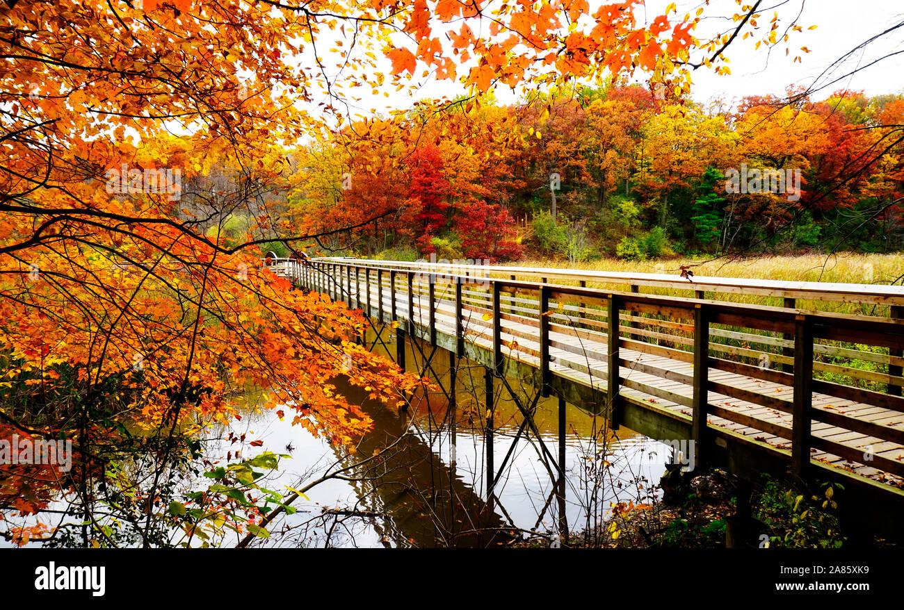 Pasarela de madera rodeada de brillantes colores de otoño Foto de stock
