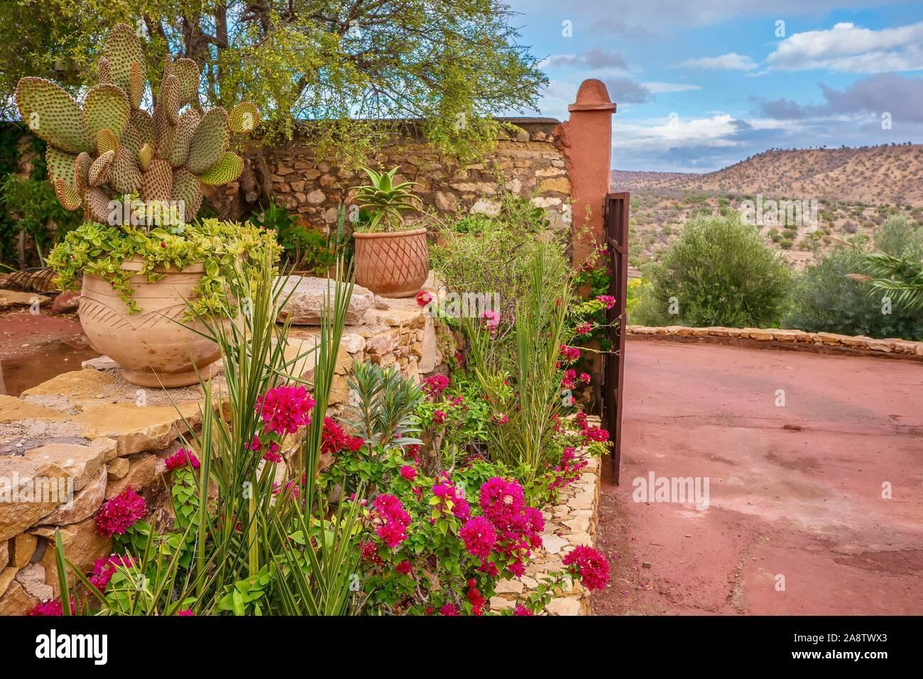 Bastante desierto de jardinería, con buganvillas rosas vibrantes y macetas creando un colorido jardín ornamental en zonas rurales de Marruecos. Foto de stock