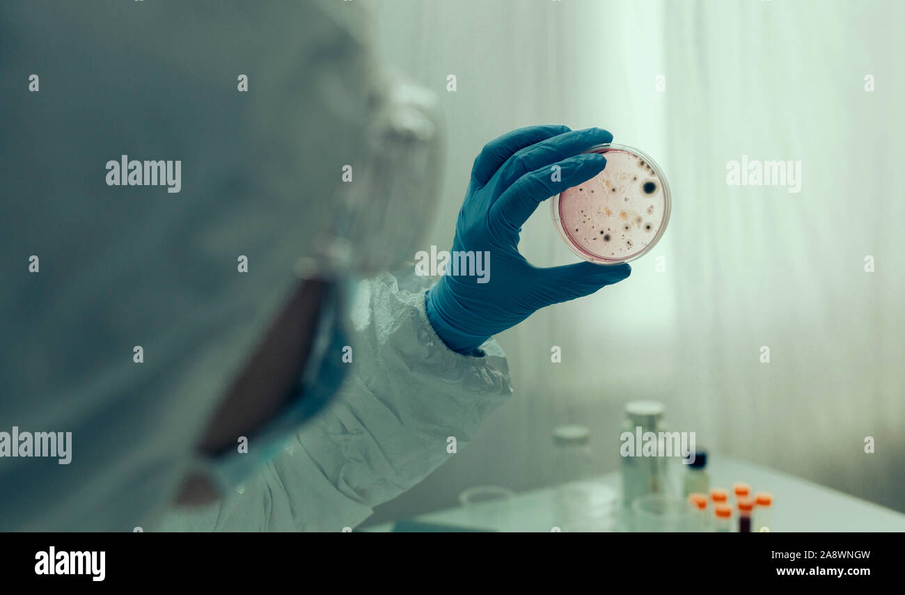El examen científico de virus en placa de Petri en el laboratorio Foto de stock