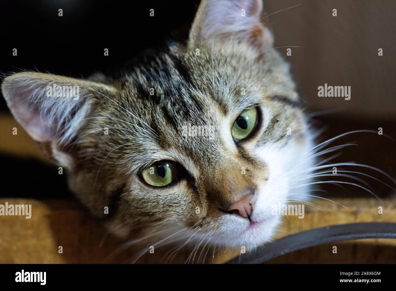 Un lindo adorable pequeño gatito con ojos verdes relaja una cesta de madera Foto de stock