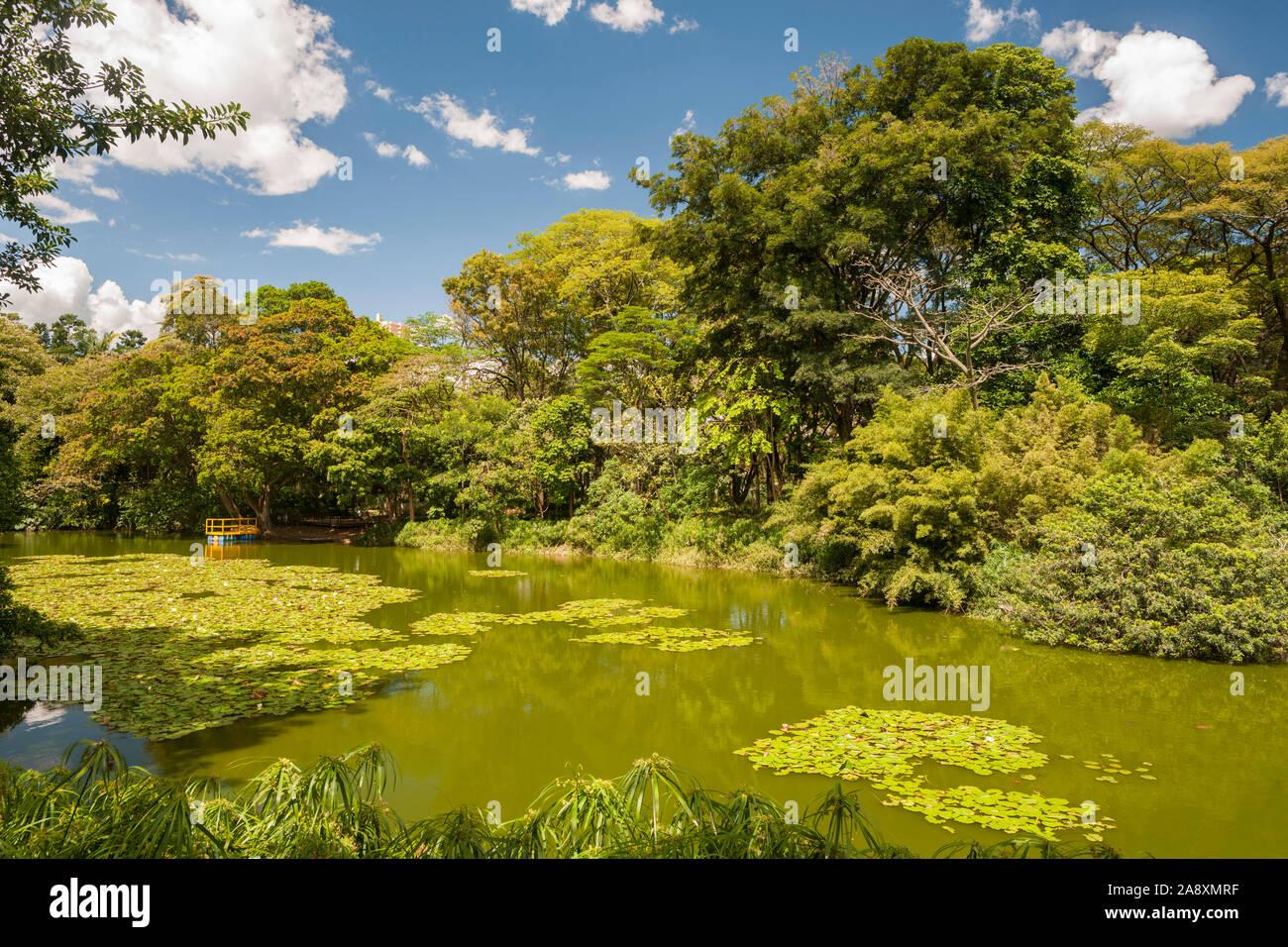 El jardín botánico de Medellín, Colombia. Foto de stock