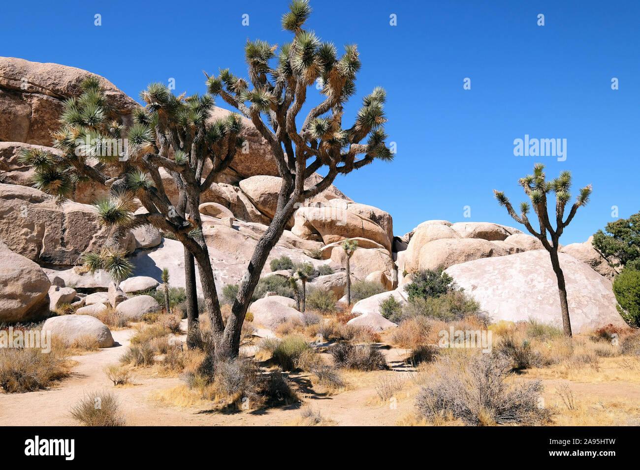 El Parque Nacional Joshua Tree National Park, California, EE.UU. Foto de stock