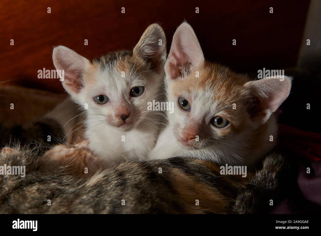 Dos gatos lindos bebes Foto de stock