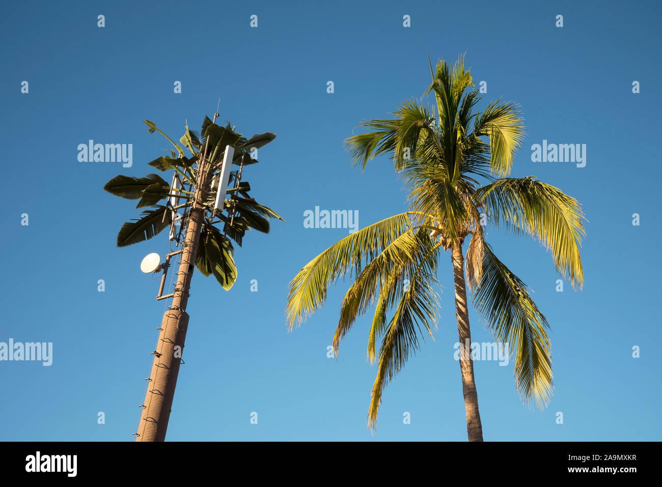 Palmera y torre de telefonía móvil; Cabo San Lucas, Baja California Sur, México. Foto de stock