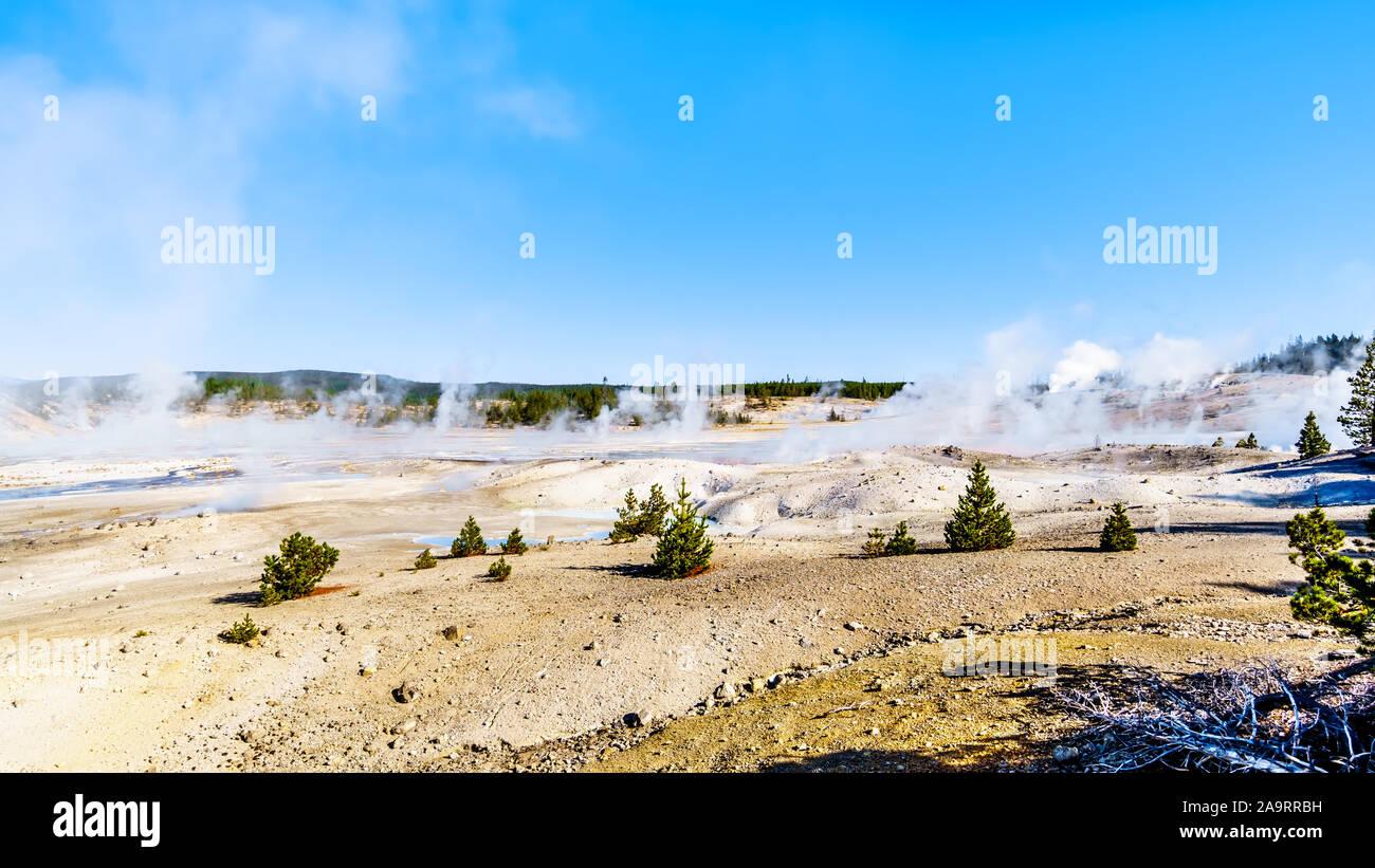 Los géiseres bajo un cielo azul en la cuenca de porcelana de Norris Géiser Cuenca, en el Parque Nacional de Yellowstone, en Wyoming, Estados Unidos de América Foto de stock