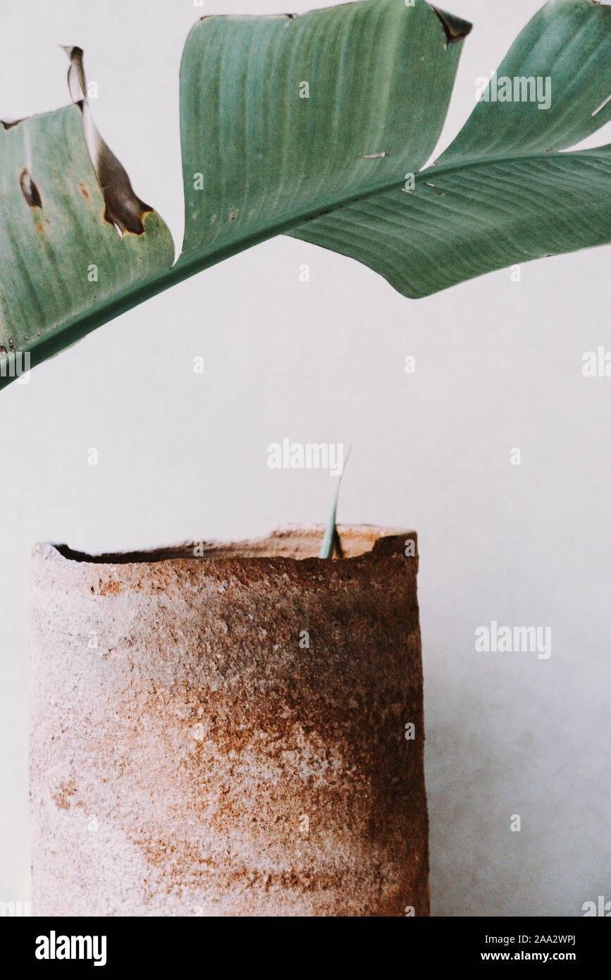 Close-up de una hoja de palma y la maceta Foto de stock