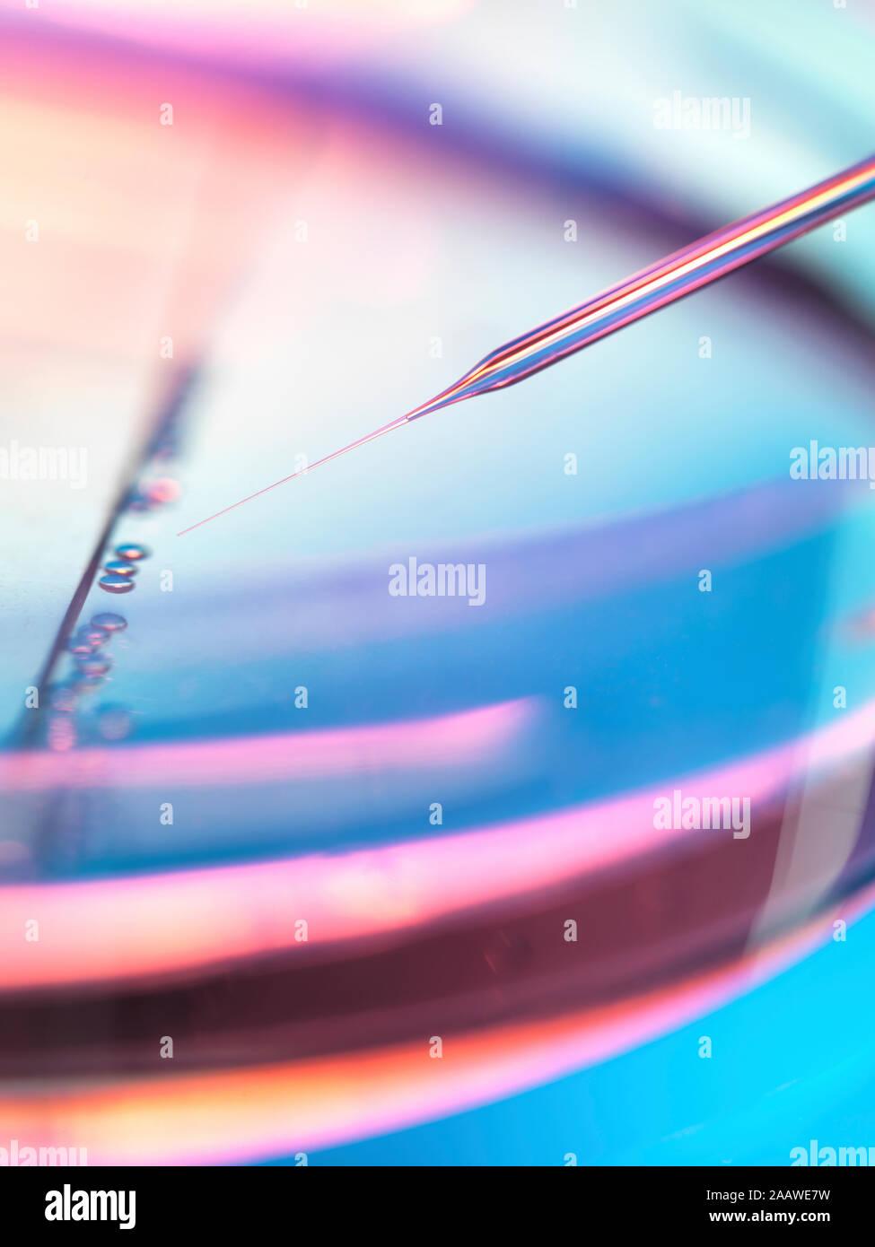 Extreme close-up de muestras en placas petri de pipeteado de experimento en laboratorio de células madre Foto de stock