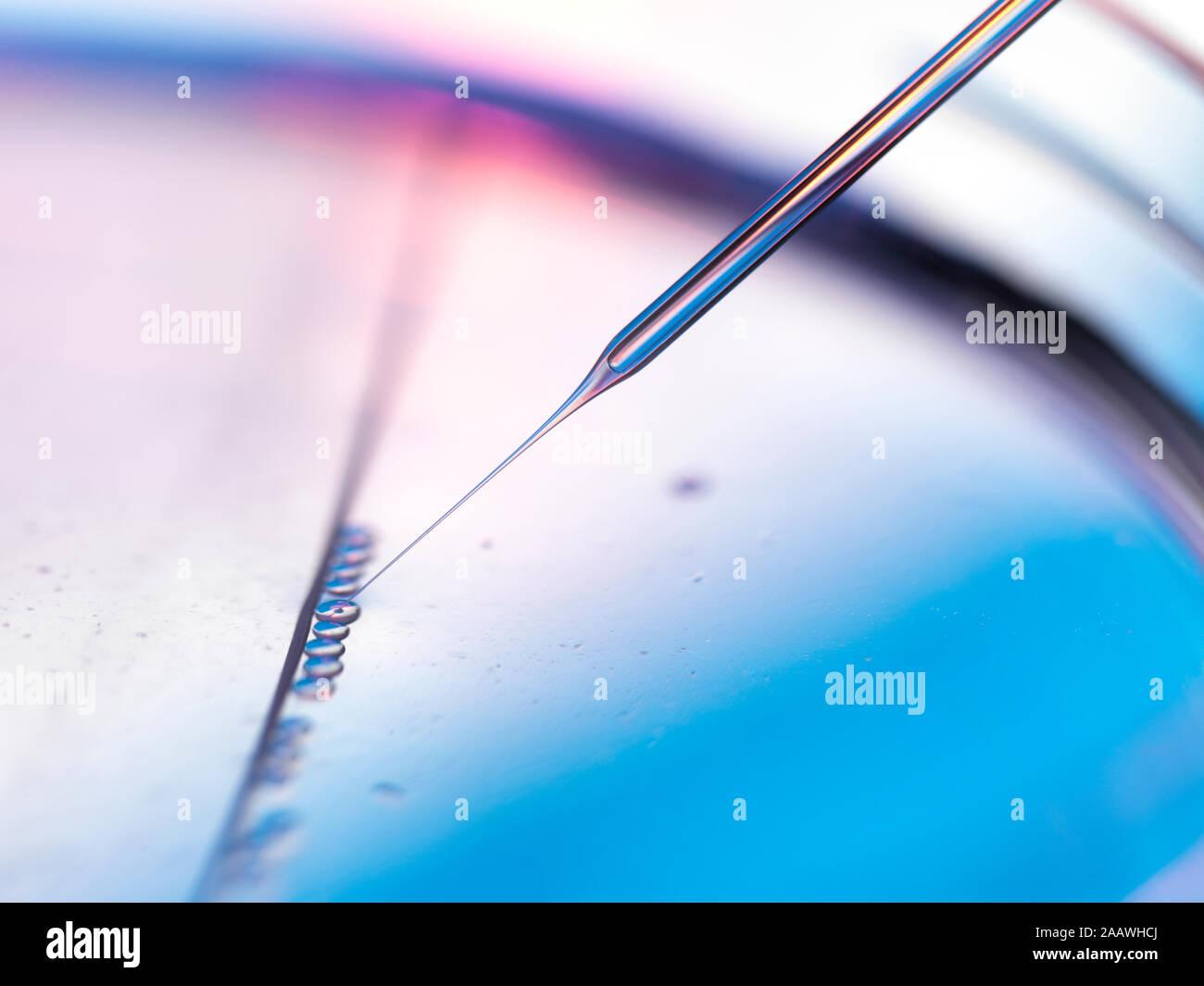 Close-up de muestras en placas petri de pipeteado de experimento en laboratorio de células madre Foto de stock