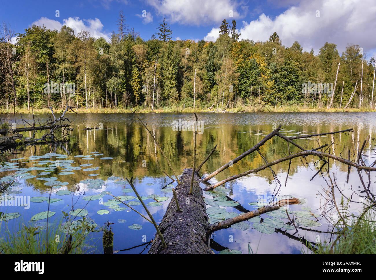 Vista sobre el lago Jezioro Francuskie (Francés) Reserva Natural Dylewo colinas parque paisajista, Ostroda County en Polonia Foto de stock