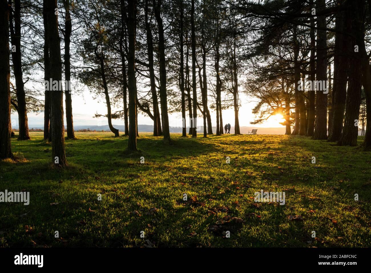 Los árboles en la parte superior de mayo Hill al atardecer en Gloucestershire, Reino Unido Foto de stock